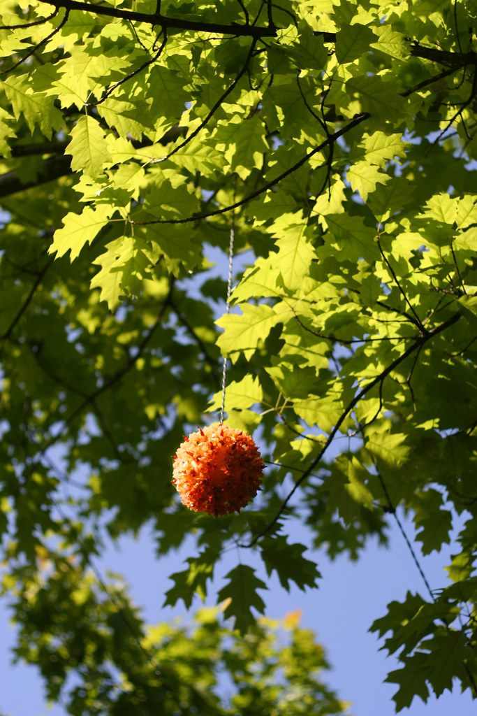 an orange ball of lights in a sea of translucent green leaves