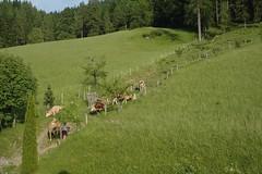 Österreich: Eben