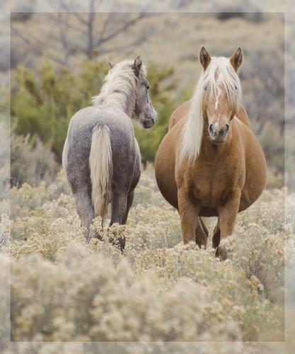 NM Wild Horses (61) nwm