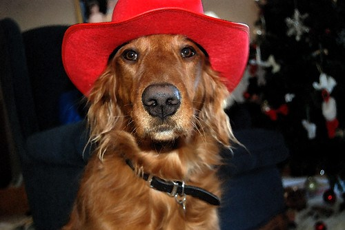Ellie the Dog