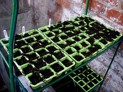 Seed Trays: Spinach, Squash, Onion, Courgette,...