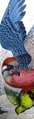 Adam Haslett, Union Atlantic, Einaudi sl 2010, progetto grafico di Riccardo Falcinelli, alla cop.: ©Mary Evans / Archivi Alinari: cop. (part.), 1