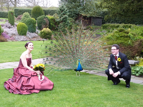 A bit of wedding birdwatching!