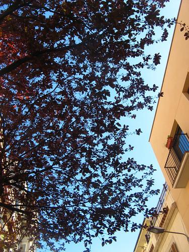 sky leaf puzzle