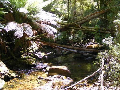 2008_0106australia20355