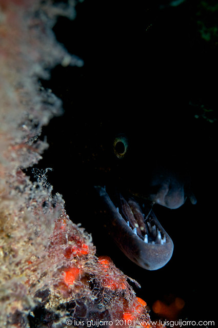 Mysterious Moray Eel-15/365