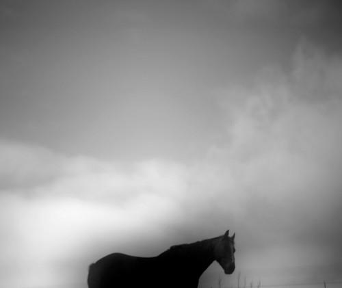 hest-no1