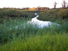 Flowage