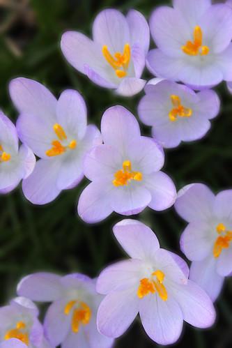 Spring! 45/365