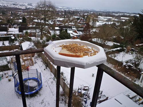 Bird Table in the Sky