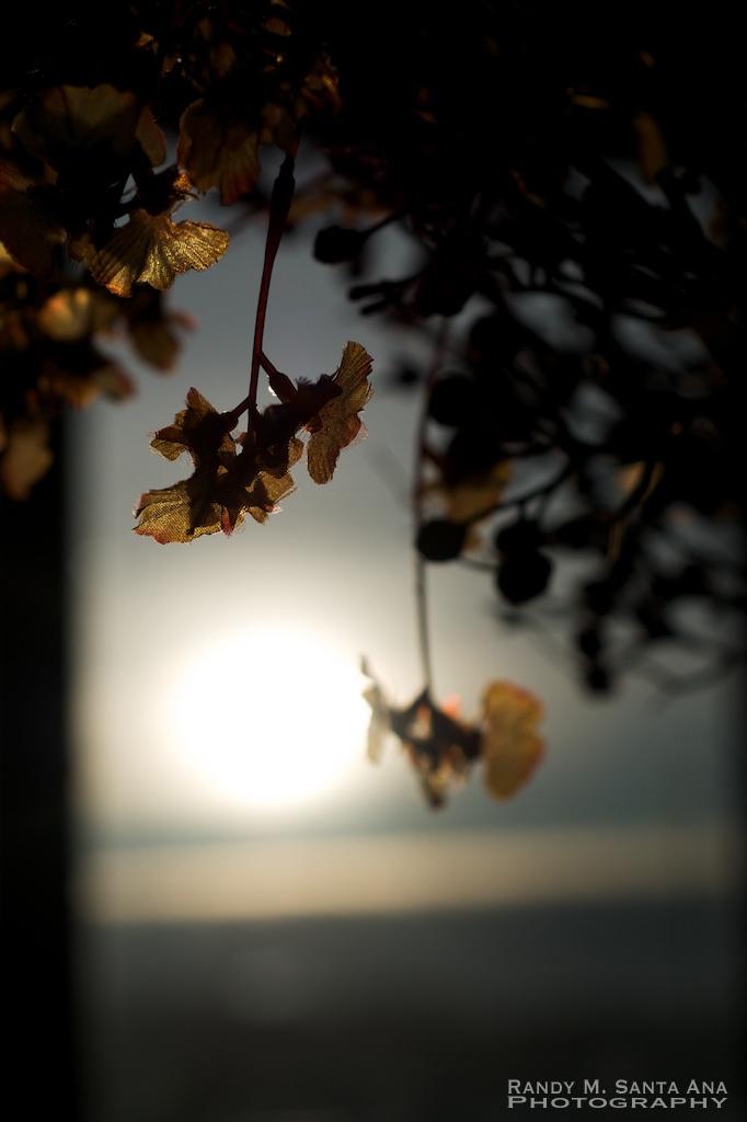 365/016 Sunrise Saturday: A New Day!