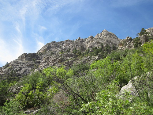 High Up On the Organ Mountains