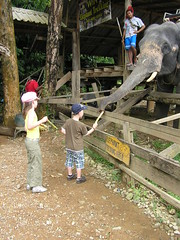 Feeding majestic elephants