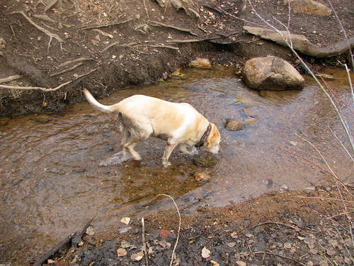 Sadie in stream