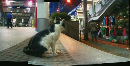 Asok Cat watch