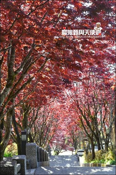 《遊記》2010宜蘭太平山森林遊樂區&翠峰湖&鳩之澤溫泉 @ 魔鬼甄與天使嘉 :: 痞客邦