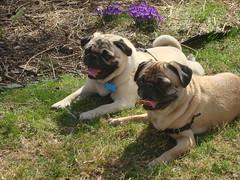 Otis and Annie