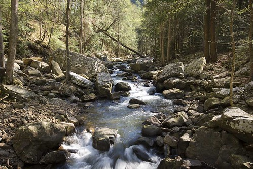 Cloudland Canyon,GA