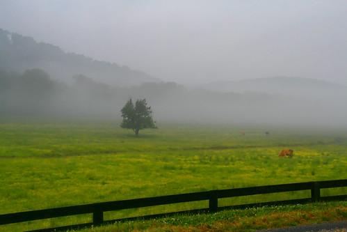 Misty Green Pastures