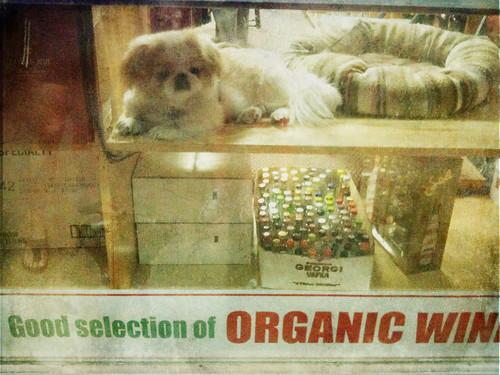 Liquor Store Guard Dog 113/365