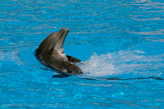 Loro Parque Dolphin Display