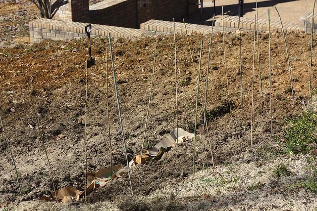 Garden Soil Feb. 2011