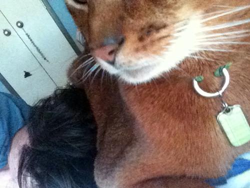 jake-headcat0721