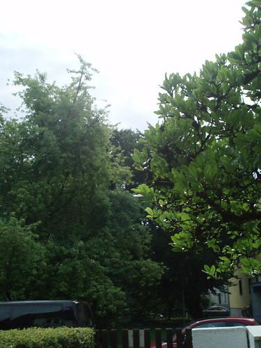 Zwölf2010_Aug1