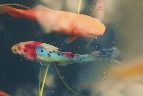 Fish Pond 1
