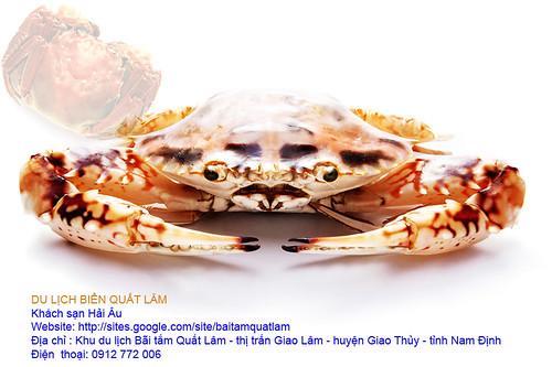 sea food (12)