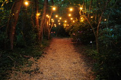 woodland festival