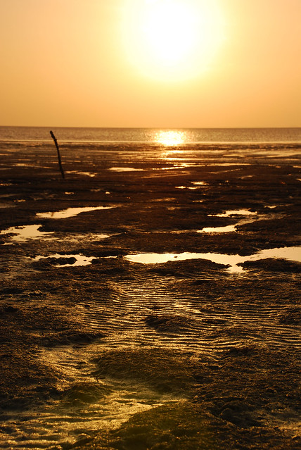 Golden Sun-Down....