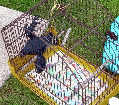 Fake crow