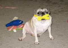 Kiki loves her stuffed Peep.