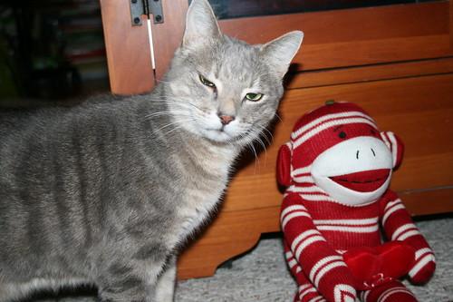 Cossy says no monkey kisses!
