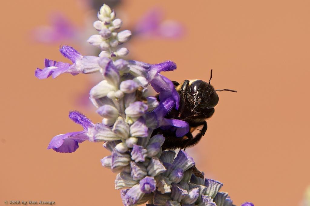 Peekaboo Bee