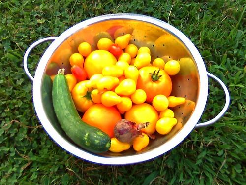 Our garden's bounty