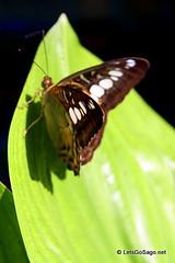 Davao Butterfly Farm
