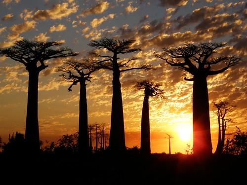 Puesta de sol en la Avenida de los Baobabs