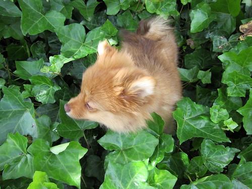 Georgie in the Leaves