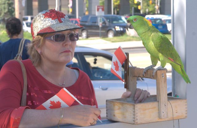 Maybe the parrot was there to see the tall ships, or is that just a stereotype?