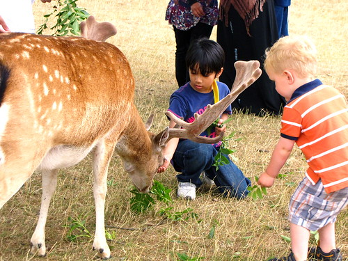 Hand feeding the deer
