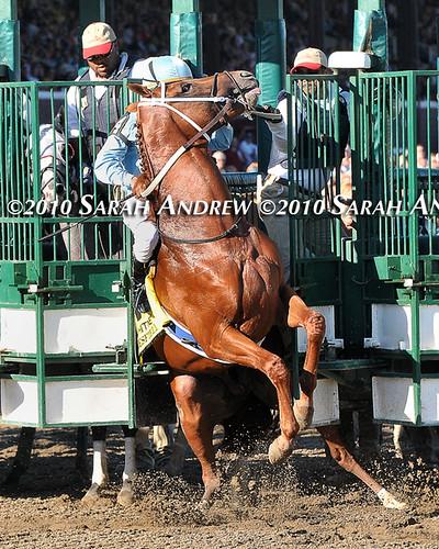 Haynesfield's Whitney starting gate mishap