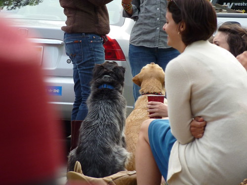 Begging Dogs at the Fourth of July Party