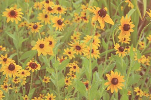 365-191 yellow flowers