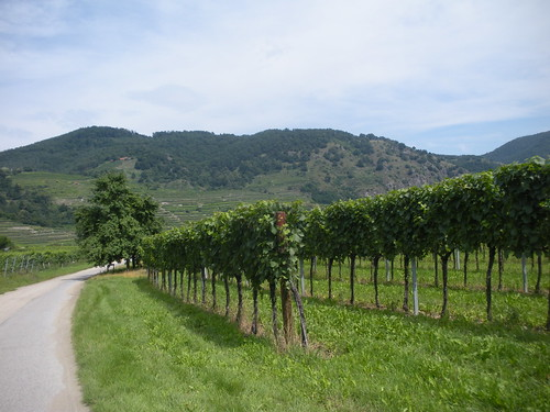 Wachau valley on Danube