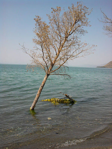 lake-tree-2