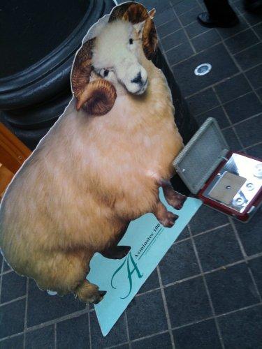 Large ram