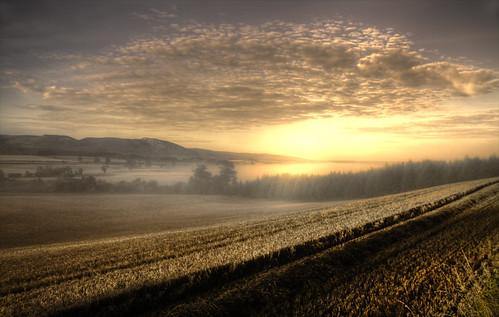 Morning Mist - Perthshire