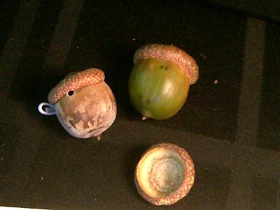 20100908_acorn2
